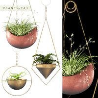 hanging plants 143 3D