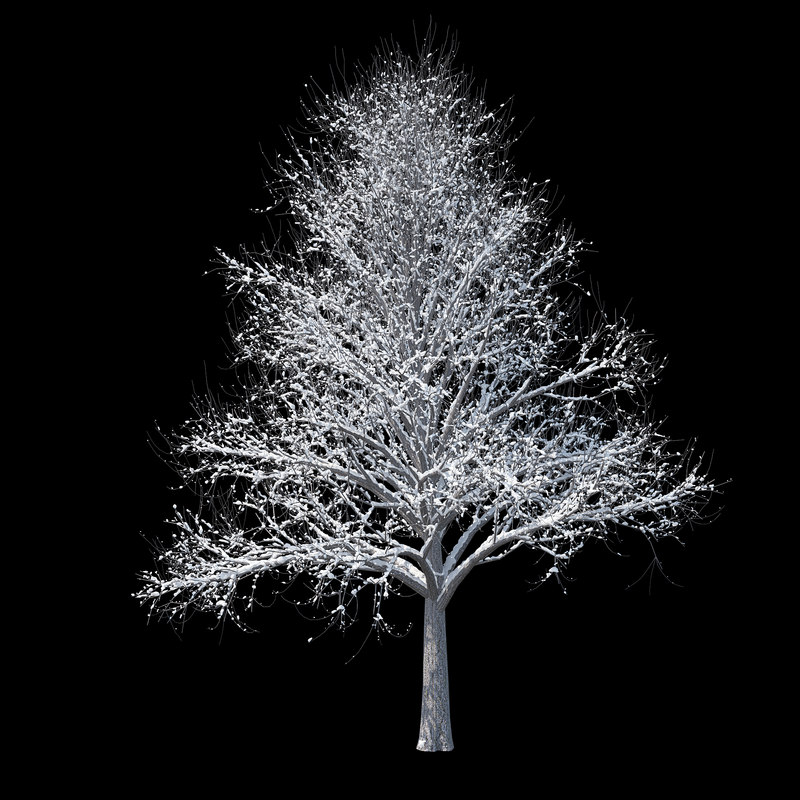 3D winter tree 01 model