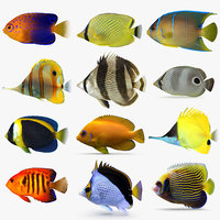 butterflyfish angelfish angel fish 3D