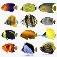 butterflyfish angelfish angel fish 3D