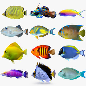 reef fish 3D model