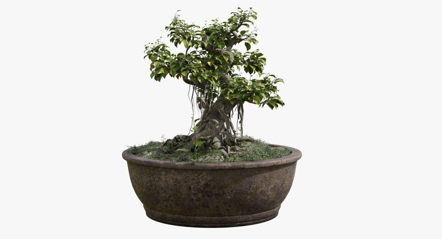 how to make banyan tree model