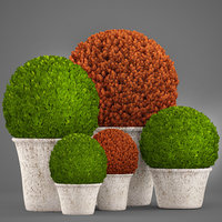3D model topiary bush buxus