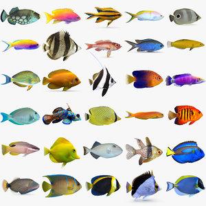 3D reef fish