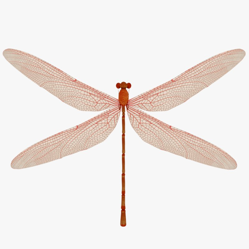 3D red dragonfly