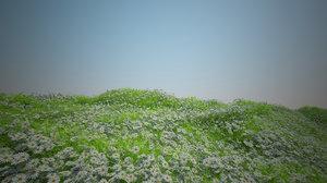 3D camomile coastal grass