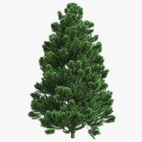 cr01 christmas tree fir 3D model