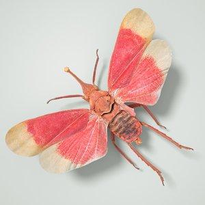 3D cicadinae cicadidae true