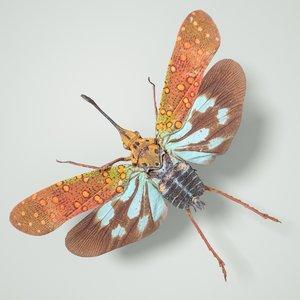 cicadinae saiva gemmata laos model