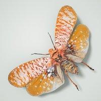 cicadinae cicadidae true 3D