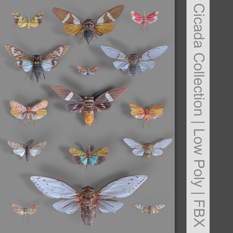 3D cicadinae cicadas insect 15