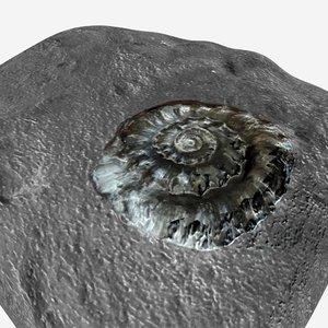 3D eoderoceras fossil