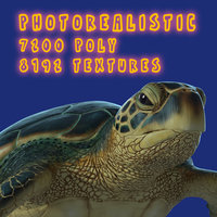 3D model photorealistic green sea turtle