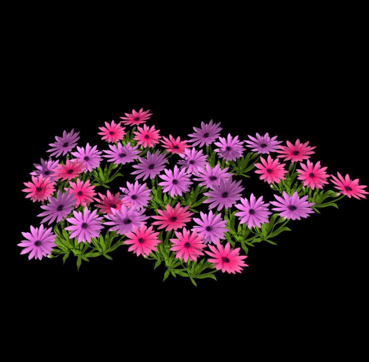3D daisie flower