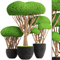 bonsai tree 3D model
