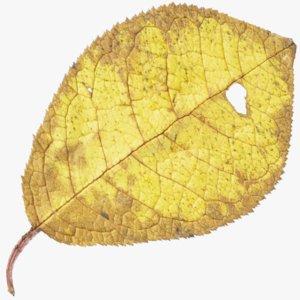 3D autumn leaf model
