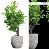 plants 145 3D model