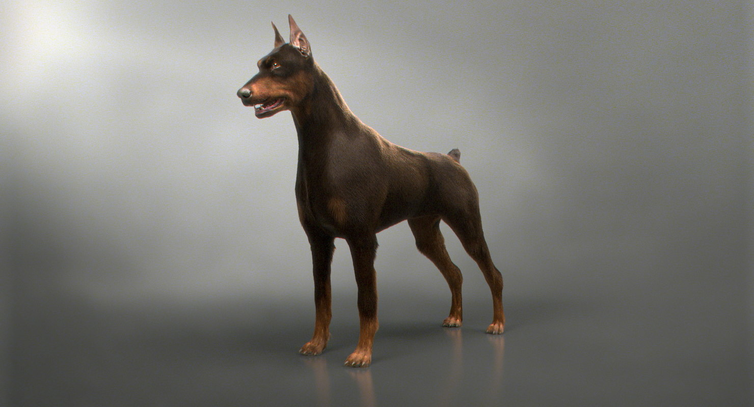 3D doberman real arnold
