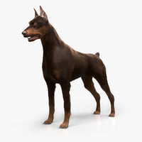 Doberman (Fur)