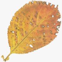 Autumn Leaf V14