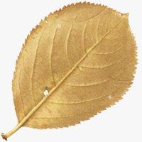 autumn leaf model