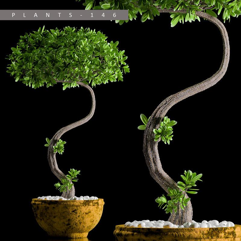 3D plants 146