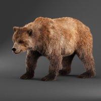 3D bear fur