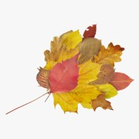 autumn leaves bouquet 3D model