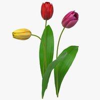 realistic tulip flower 3D