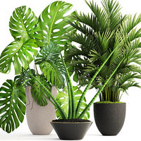 3D plants howea forsteriana