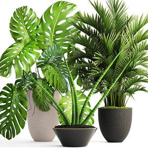 3D plants howea forsteriana