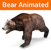 brown bear animation 3D