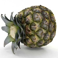 3D pineapple pine model