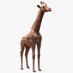 3D model realistic giraffe