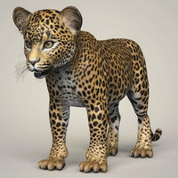 3D model realistic baby leopard