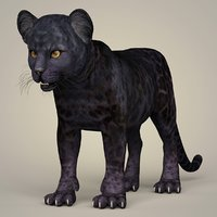 3D photorealistic baby panther animation model