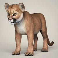 photorealistic baby cougar 3D model