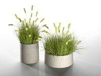 3D pennisetum pots