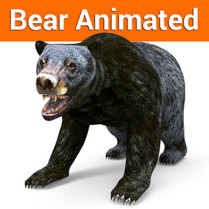 3D black bear animation model