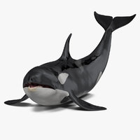 killer whale lies floor 3D model