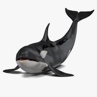 killer whale lies floor 3D model