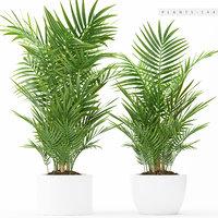 plants 144 palm 3D