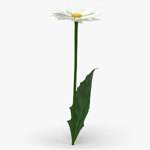 realistic chamomile flower 3D model
