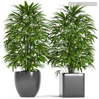 3D plants 147 palm model