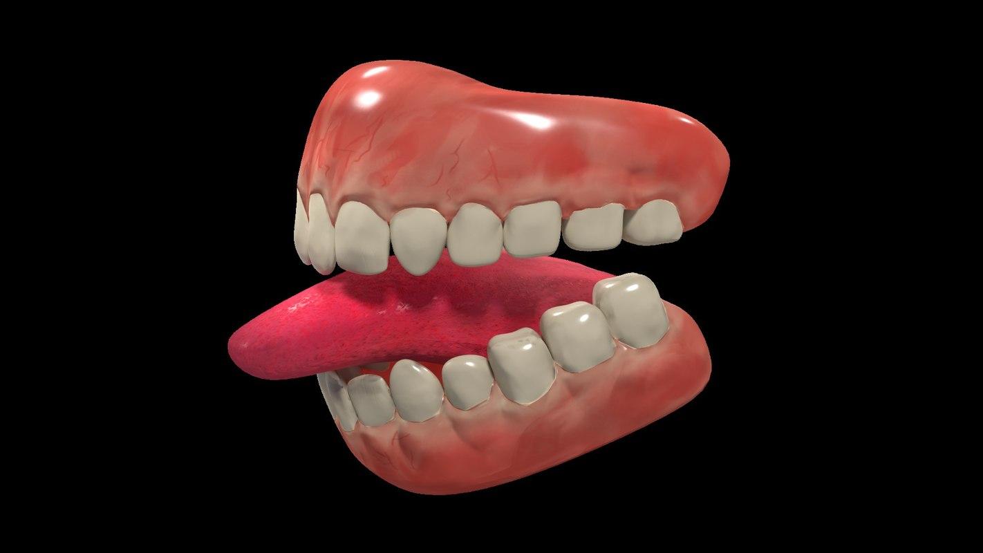 teeth gums 3D model