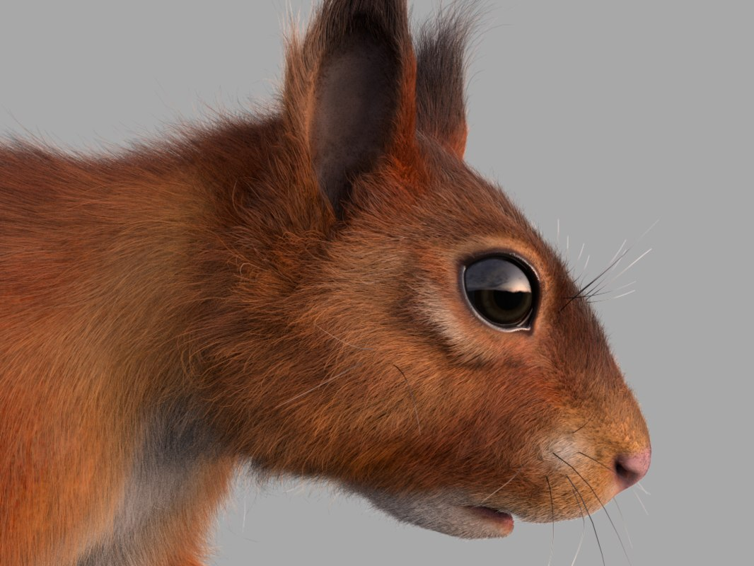 3D red squirrel model