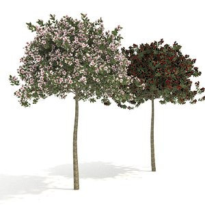 3D evereste tree bark apple