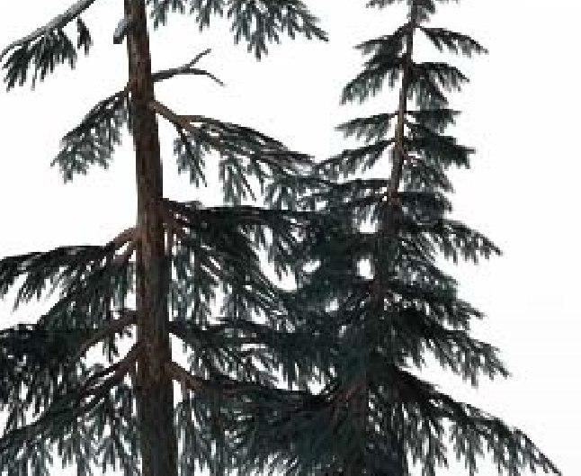 3D tree big
