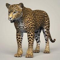 photorealistic leopard 3D model