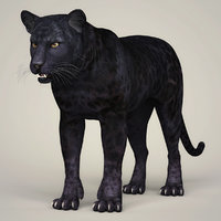3D model photorealistic panther animation